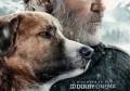 电影《野性的呼唤》电影院正式上映, 《野性的呼唤》剧情介绍